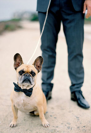 Dog with a bowtie at a wedding