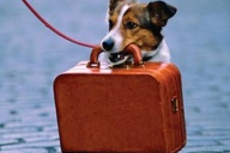 Puppy carrying a suitcase