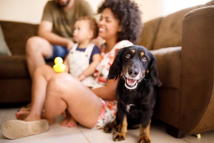 North Myrtle Beach Dog Friendly Rentals