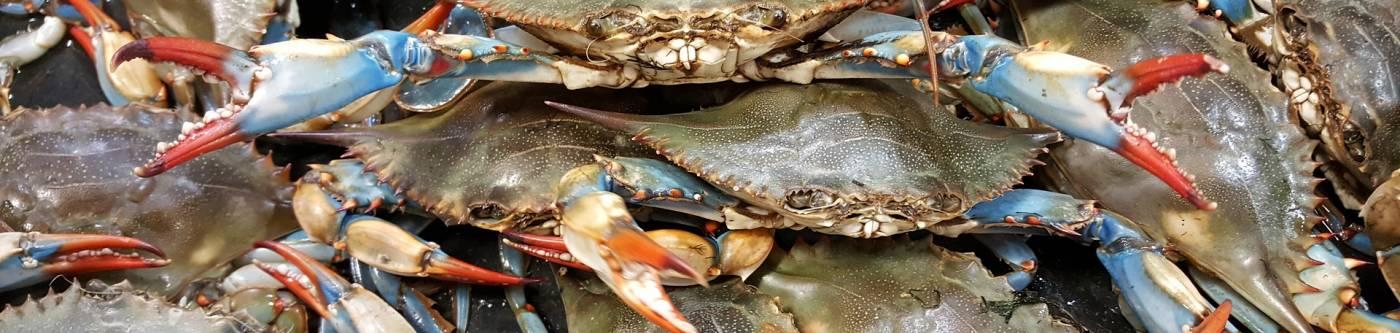 blue crab festival myrtle beach